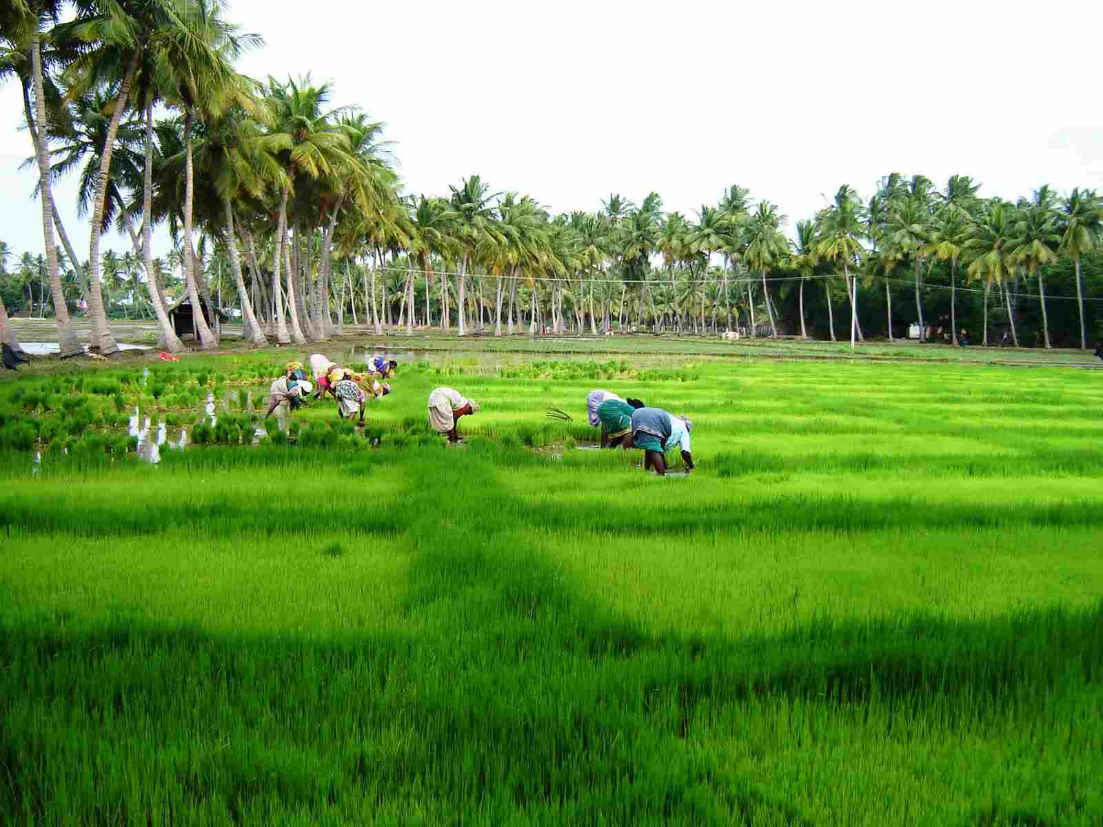 agriculture issues kerala The history of agriculture in india dates back to indus valley and kerala have planned to are working to solve problems in indian agriculture and.